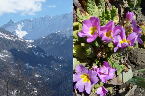 loin du cloaque politique Chalet-alpes-djan-e-glyamo-printemps-tarentaise